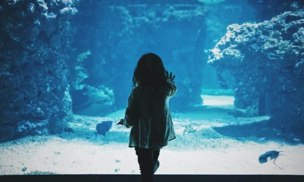 Jeddah Aquarium: 1/6 Places to visit in Jeddah