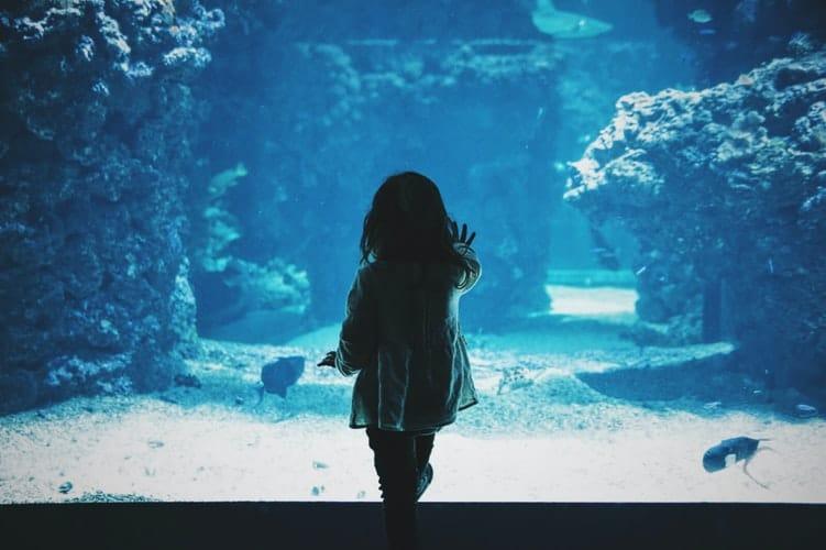 Jeddah Aquarium: 1/6 Places to visit in Jeddah